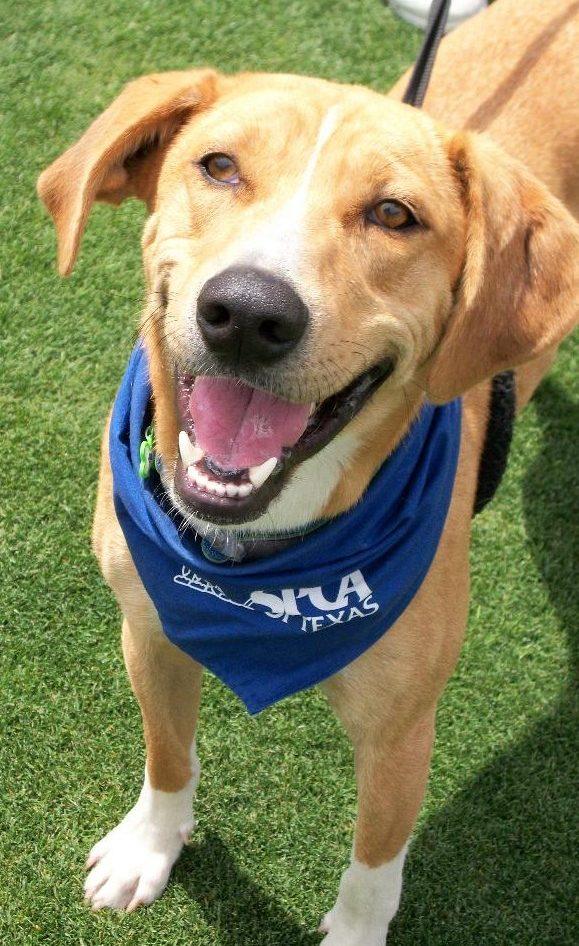 Dog Training | Park Cities Pet Sitter, Inc