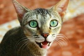 cat-390046__180