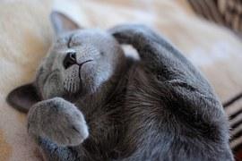 cat-777932__180