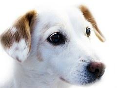 dog-72333__180